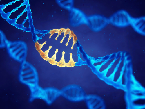 Researchers Discover How Mitochondrial DNA is Transferred From Mother to Child