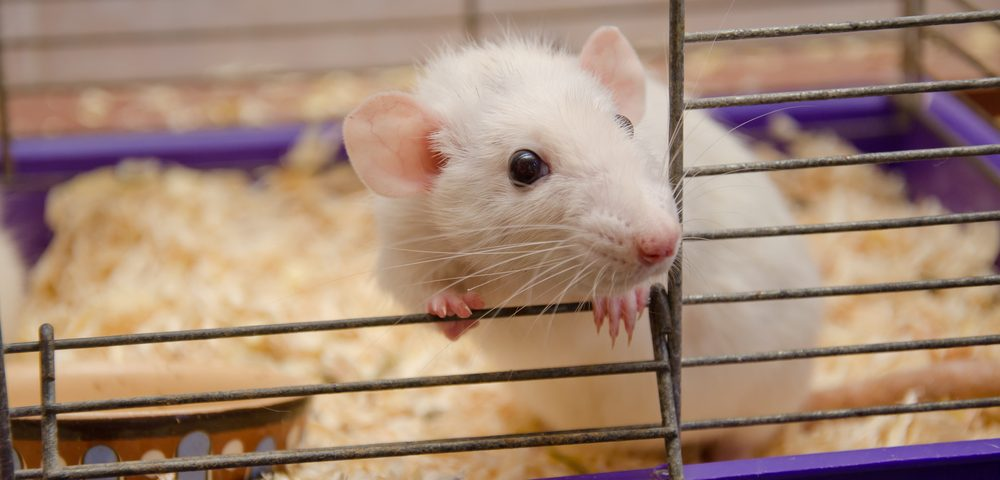 Stem Cells from Fat Tissue Protect Motor Neurons in ALS Mice
