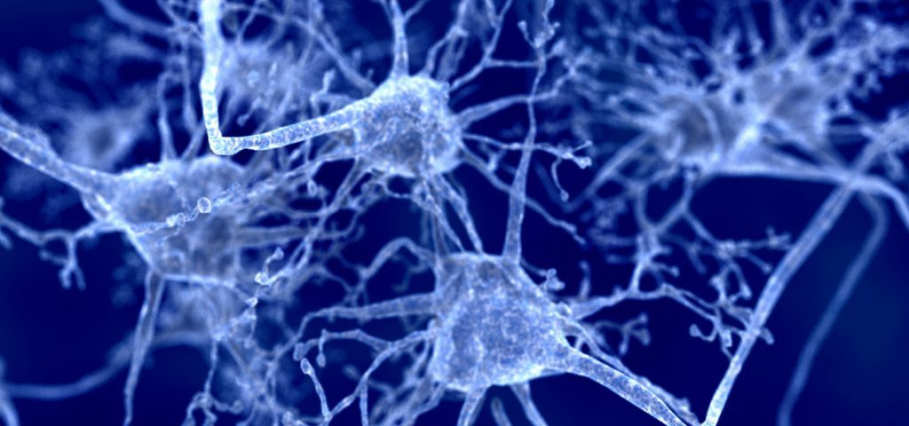 Boosting Cholesterol Recycling in Brain Facilitates Myelin Repair, Study Says