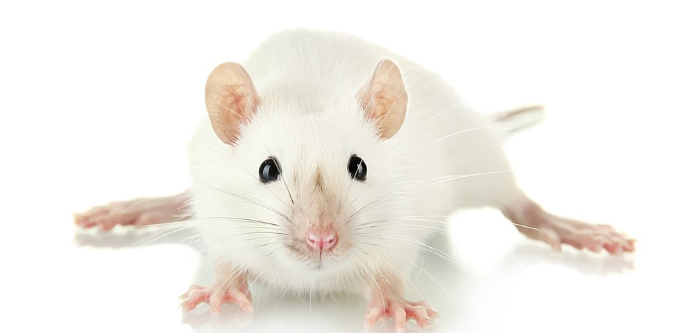 Gene Therapy, Now in GD1 Trial, Shows Efficacy in Mice at Varying Disease Stages