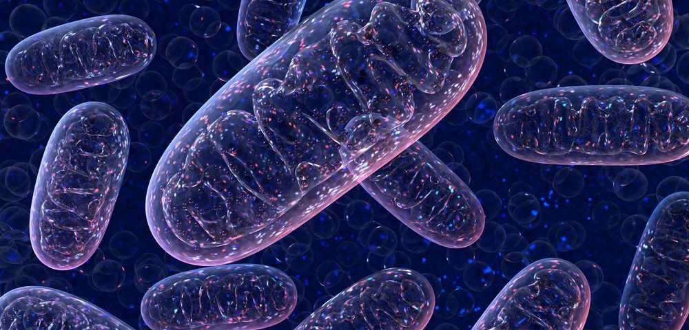 Mitochondrial Gene Mutation Linked to CMT in Large Venezuelan Family