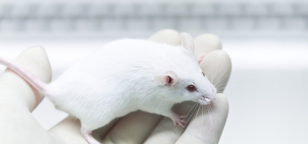 Gene Therapy With More Effective Carrier Shines in Mouse Study