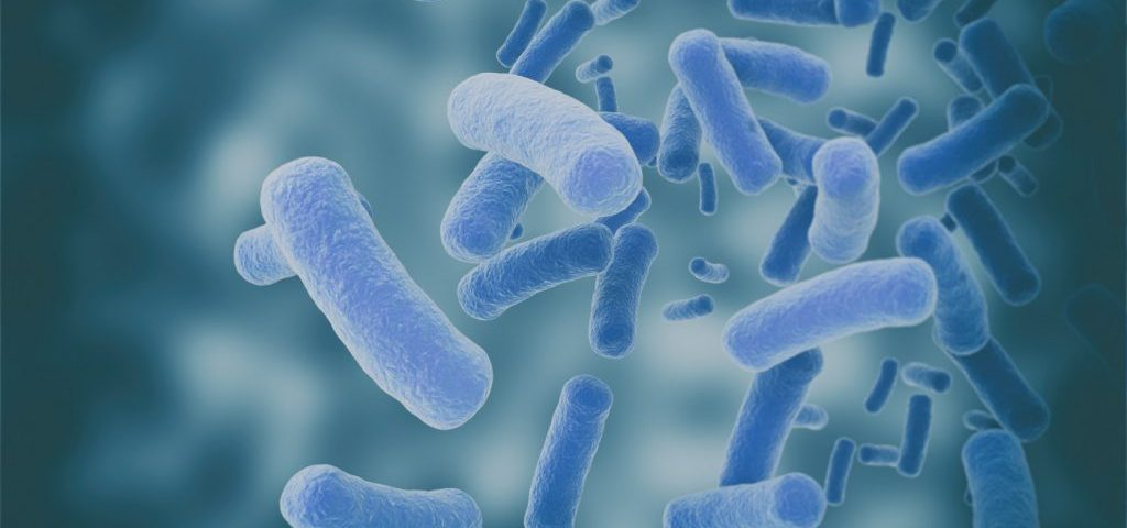 Bacteria in Irish Soil Seen to Block Those Tied to Chronic Lung Infections