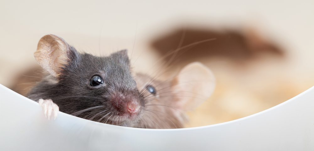 Early-life Trauma Affects MS Development, Treatment in Mice