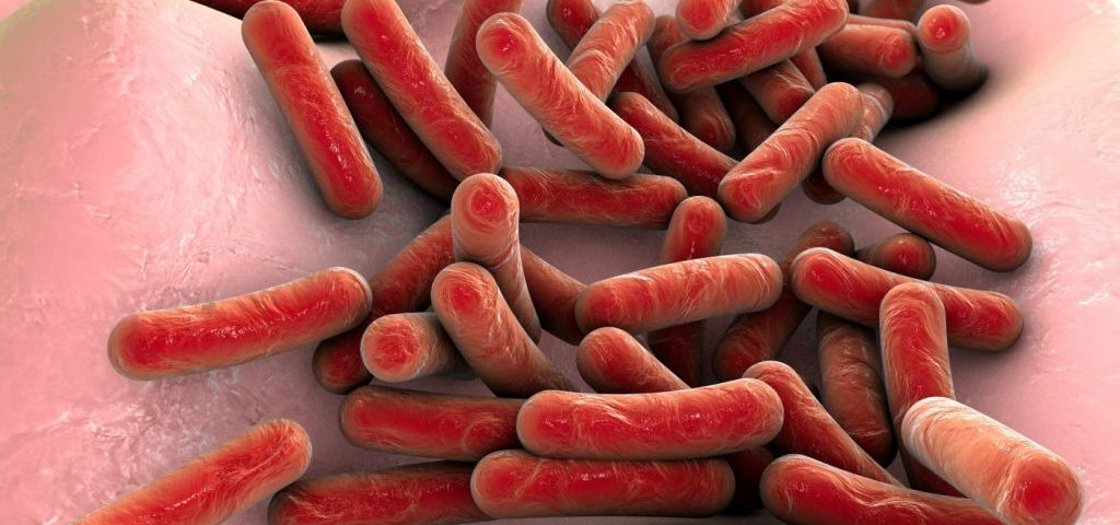 Emerging Bacteria Species Shows Antibiotic Resistance, Patient Transmission