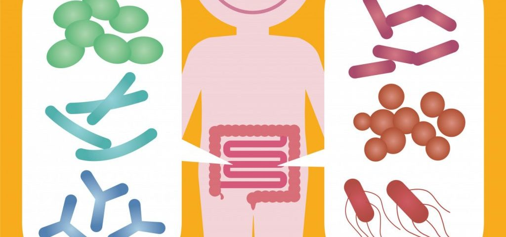 Bile Acids Altered by Gut Microbes in Appendix