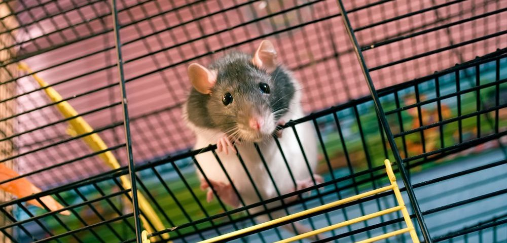 Compound Reverses Motor Neuron Damage in ALS Mice