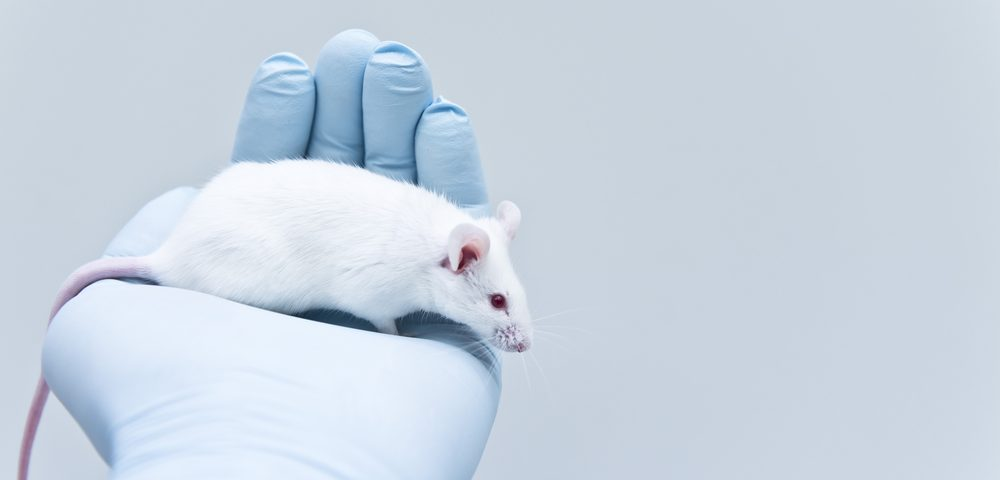 Used in Chinese Medicine, Plant Compound Reduces Lung Scarring in Rats