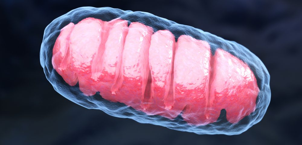 Mitochondrial DNA Carried in Blood May Trigger Inflammation in Sickle Cell