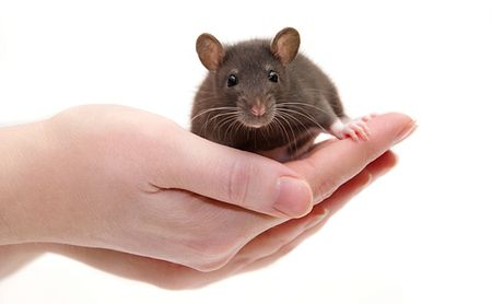 Investigative Immunotherapy ImmCelz Shows Promise in Mice