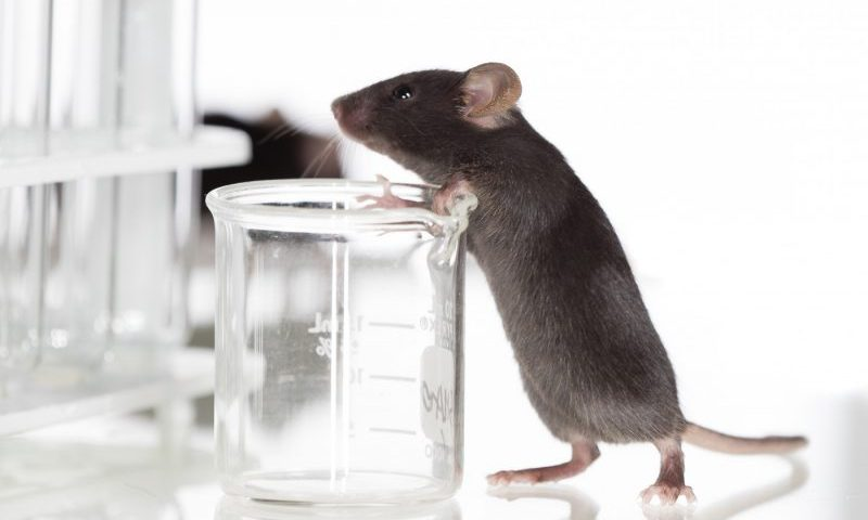 Protein From Stem Cells Triggers Nerve Cell Repair in Mouse Model