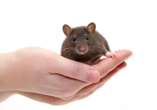 Differences in Mouse, Human Astrocytes May Impact Research