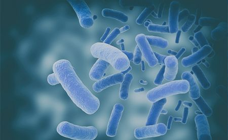 FSR Awards $150K to Study Role of Microbes in Neurosarcoidosis