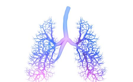 Orkambi Seen on CT Scans to Aid Lung Health, Mucus Clearance