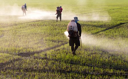 Work Exposure to Paraquat Doesn't Raise Risk of Dying of Parkinson's, Study Finds
