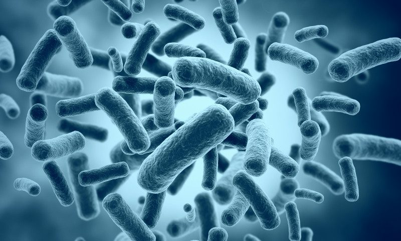 Gut Bacterial Markers May Aid Diagnosis of Children