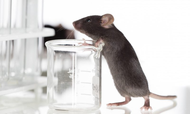 Potential Genome-editing Therapy Shows Promise in Fabry Mouse Model