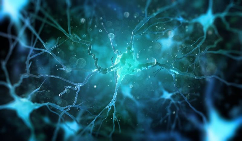 New Research Project Will Study Nerve Cell-Glia Communication