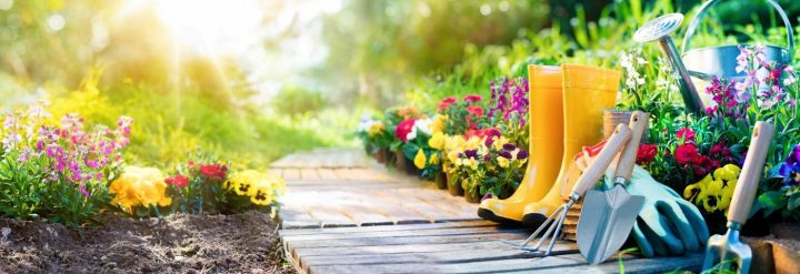 Gardening Can Teach Us Lessons About Healing