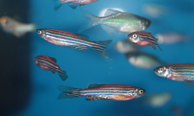 Antibiotic-resistant Bacteria in Fish Treated by Adding Phage Therapy